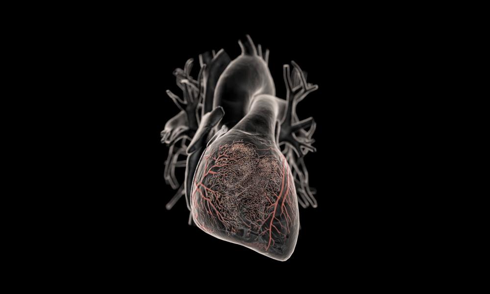 Паразиты в сердце челловека