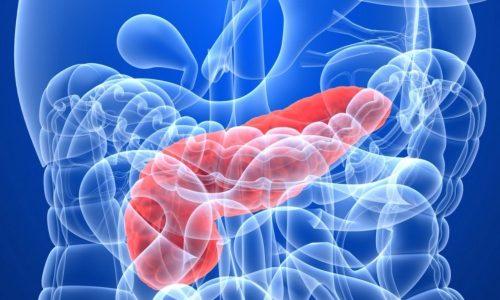 Степень уровня эластазы является главным признаком функционирования органа пищеварительной системы человека